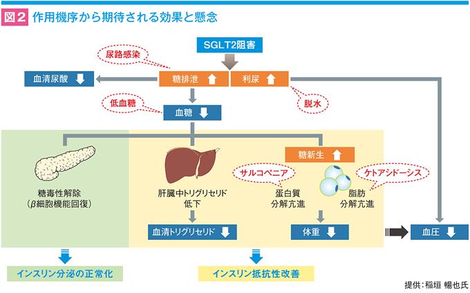 ケトン 性 低 血糖
