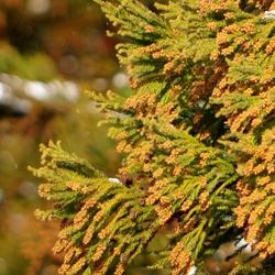 花粉症に対する抗ヒスタミン薬の使い分け:DI Online