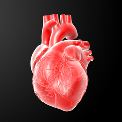 覚醒下心臓手術は新たな選択肢と...